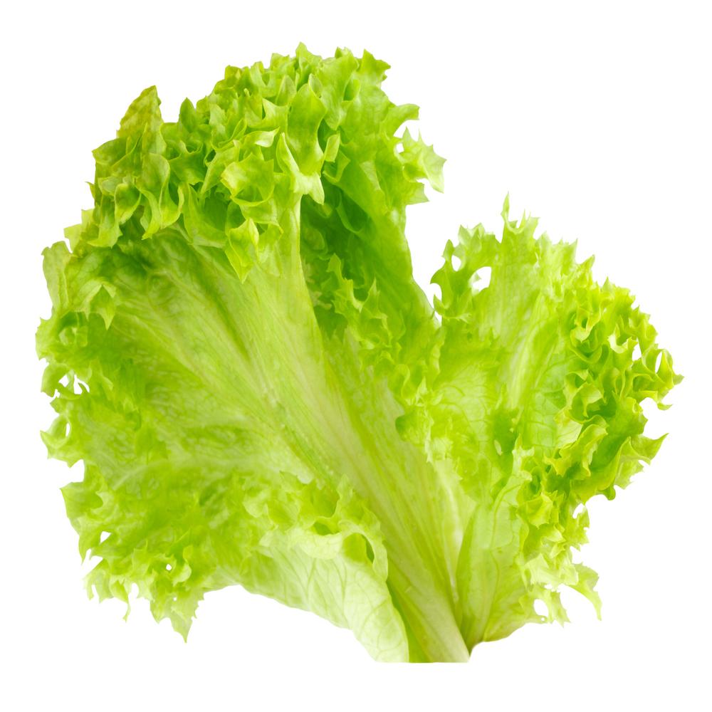 leaf fresh lettuce isolated on white background